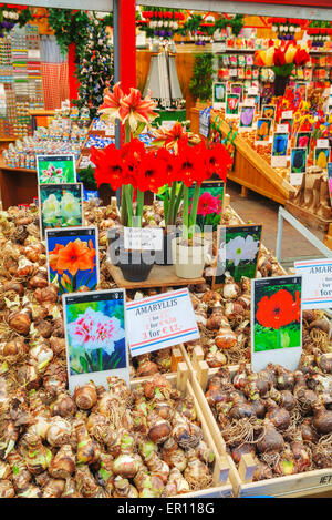 AMSTERDAM - APRIL 17: Boxes with bulbs at the Floating flower market  on April 17, 2015 in Amsterdam, Netherlands. - Stock Photo