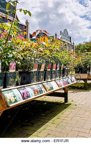 Plant display at the garden Centre, Ferndown, Dorset - Stock Photo
