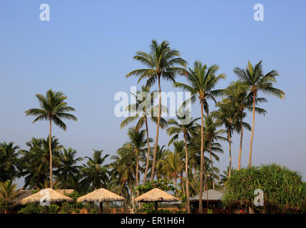 Coconut palm trees against deep blue sky, Nilavelli, Trincomalee, Sri Lanka, Asia - Stock Photo