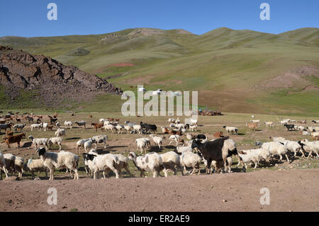 Sheep and goats herd, and yurts, at the top of a pass in the Altai mountain range, south of Altai city, Govi Altai - Stock Photo