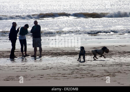 Silhouette Dog Walkers against sun on water Compton Bay Isle of Wight England UK  People talking socialising socializing - Stock Photo