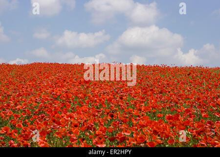 Landschaft, Blumenwiese, Mohn, bluehen, Natur, Huegel, Wiesen, Felder, Weite, Ferne, Aussicht, Horizont, Vegetation, - Stock Photo