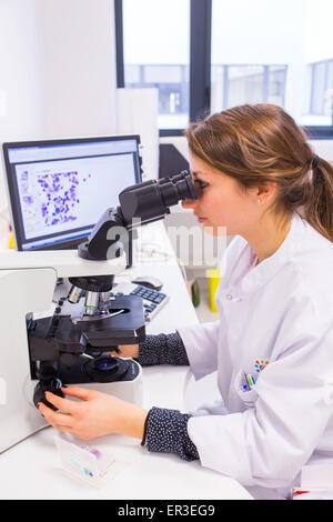 Observation of a bone marrow smears (myelogram) for the diagnosis of hematology cancers. Laboratory hematology cytology. - Stock Photo