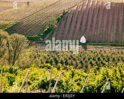 Trullo,typical shelter in the wine region of Rhine Hesse - Stock Photo