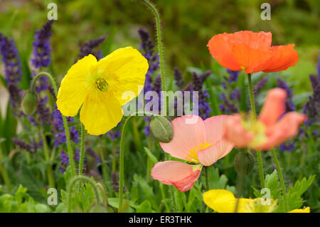 A Selection Of English Garden Flowers In A Simple White Vase In An