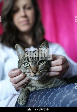A young woman petting a cat that is sitting on her lap. - Stock Photo