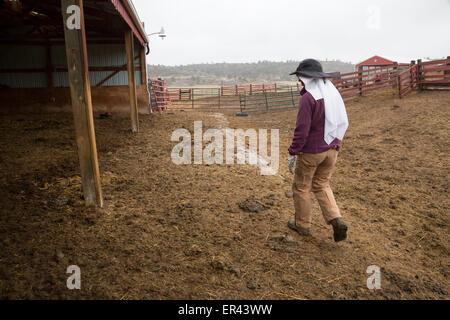 Virginia Dale, Colorado - The Abbey of St. Walburga, where Dominican nuns pray and run a cattle ranch. - Stock Photo