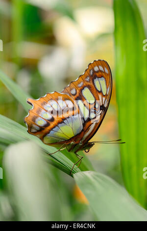 butterfly rests on leaf (EDITORIAL USE ONLY) - Stock Photo