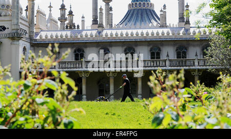 Brighton UK 27th May 2015 - Robert Hill-Snook the head gardener at Brighton's Royal Pavilion Gardens mowing the - Stock Photo