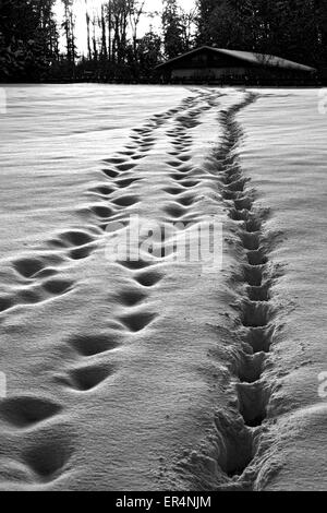 Footsteps in snow leading to farmhouse, Chiemgau, Upper Bavaria, Germany, Europe. - Stock Photo