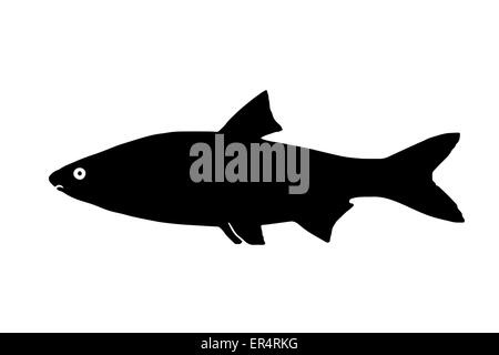 Silhouette freshwater fish Sneep, that lives in lakes and fast and clear rivers. - Stock Photo