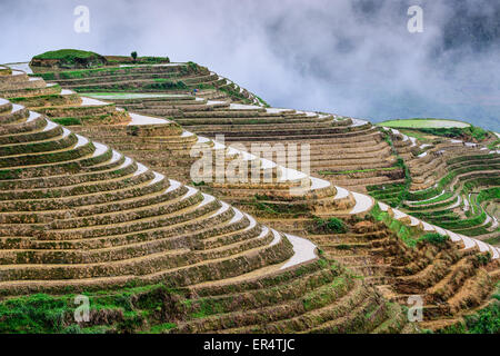 Yaoshan Mountain, Guilin, China hillside rice terraces landscape. - Stock Photo