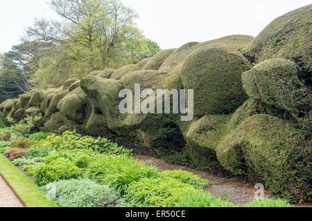 Unusual Random Topiary Walmer Castle Garden Deal Kent