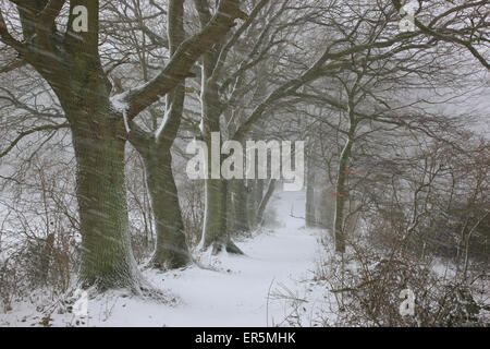 Driving snow near a path in Steffanshagen, Mecklenburg Western Pommerania, Germany - Stock Photo
