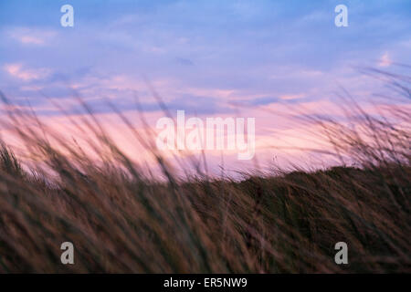 Grass in the dunes at dusk, beach, Langeoog Island, North Sea, East Frisian Islands, East Frisia, Lower Saxony, - Stock Photo
