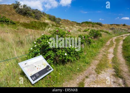 Flinthoern nature trail, Dunes, Langeoog Island, North Sea, National Park, East Frisian Islands, East Frisia, Lower - Stock Photo
