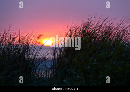 Grass in the dunes at sunset, beach, Langeoog Island, North Sea, East Frisian Islands, East Frisia, Lower Saxony, - Stock Photo