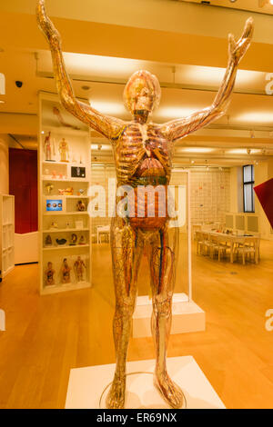 England, London, The Wellcome Collection, Educational Sculpture of Transparent Woman - Stock Photo