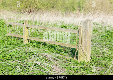 Old wooden fence in an overgrown field with a patch of common stinging nettles (Urtica dioica), England, UK - Stock Photo