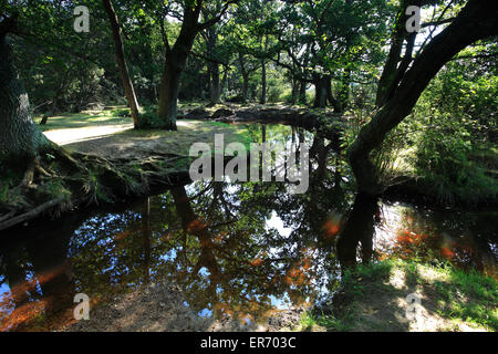 Ober Water, White Moor, New Forest National Park; Hampshire County; England; Britain, UK - Stock Photo