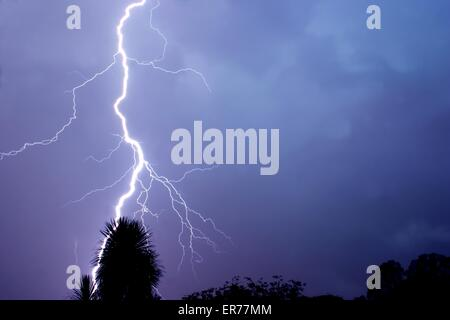 Thunderbolt of lightning at night during a thunderstorm, silhouette of a tree in the foreground - Stock Photo