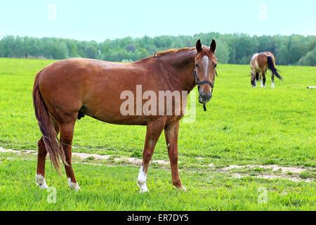 Beautiful horses - Stock Photo