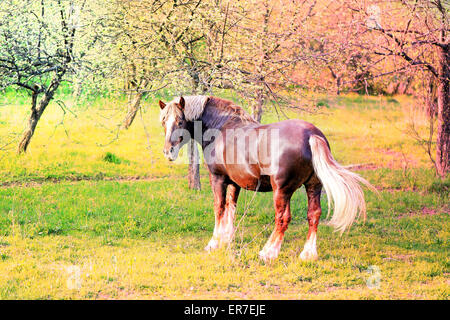 Beautiful horses on the background of the forest landscape photographed close up - Stock Photo