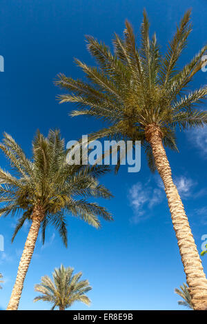 Palm trees in Egypt. - Stock Photo