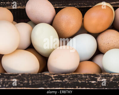 Multi Colored Organic Farmed Eggs in Wooden Crate - Stock Photo