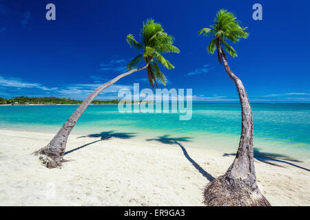 Palm trees hanging over stunning lagoon with blue sky in Fiji - Stock Photo