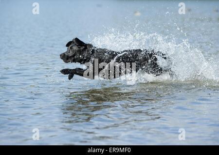 Hunting Dog Training St Cloud Mn