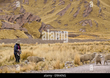 Shepherd with flock in Tinajani Canyon (Canyon of the Devil), Peru - Stock Photo