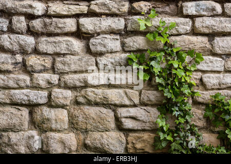 Backgrounds - An ancient stone wall with ivy growing up it. - Stock Photo