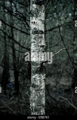 Landscapes big and small from Germany - Stock Photo