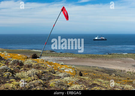 Striated caracara Phalcoboenus australis, adult, flagpole & MV Ortelius, Steeple Jason Island, Falkland Islands - Stock Photo