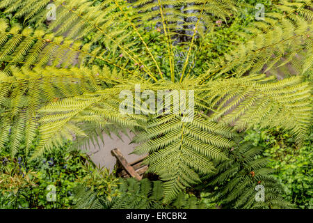 High angle view on a palm tree in the Quarry Garden at Standen House, East Grinstead, West Sussex, England, United - Stock Photo