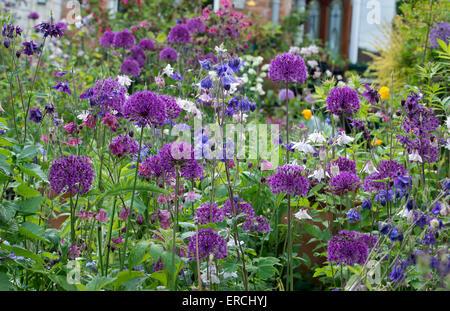Small terraced English town urban garden in full flower. UK - Stock Photo