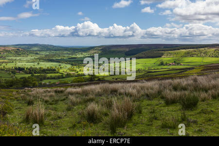 North York Moors National Park showing Glaisdale dale with fields, farmland, trees, cotton grass under a bright - Stock Photo