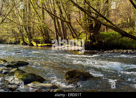 Fast river flowing over  rocks and boulders through ancient woodland in Cornwall south of Bodmin Moor - Stock Photo