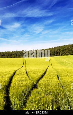 Tractors tracks in a wheat field - Stock Photo