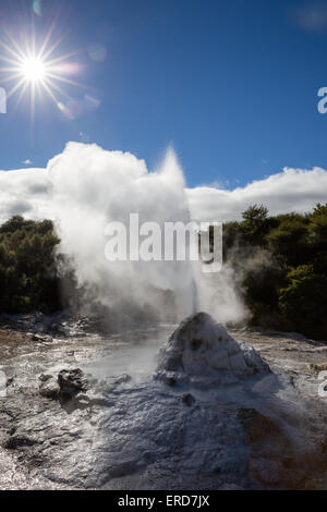 Lady Knox Geyser performing its daily eruption in Wai o Tapu Thermal Wonderland in New Zealand's North Island - Stock Photo