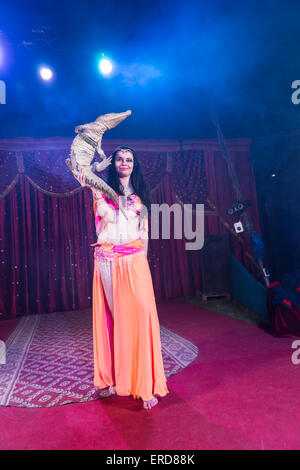 Full Length Portrait of Exotic Dark Haired Belly Dancer Wearing Bright Costume Balancing Small Crocodile on One - Stock Photo