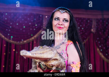 Portrait of Exotic Dark Haired Belly Dancer Wearing Bright Costume Holding Small Crocodile While Standing on Stage - Stock Photo