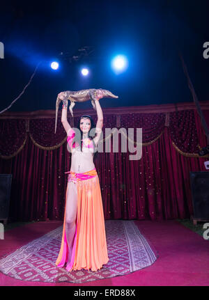 Full Length Portrait of Exotic Dark Haired Belly Dancer Wearing Bright Costume Holding Small Alligator Above Head - Stock Photo