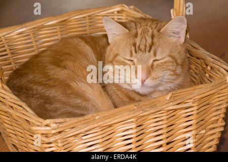 Orange tabby cat happily sleeping in a wicker basket - Stock Photo