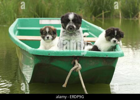 Eloschaboro Puppies - Stock Photo