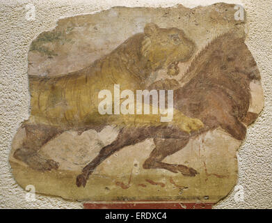 A tiger attacking a wild boar. Roman painting. Domus. 4th C. From Merida (Augusta Emerita). National Museum of Roman - Stock Photo