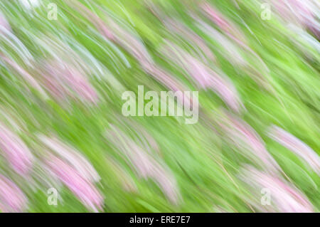 Natural background - diagonal wavy lines in purple and green shades - Stock Photo