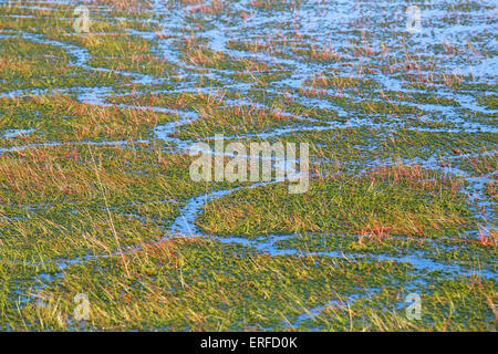 background of green algae and water on swamp - Stock Photo