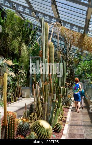 Inside the cactus greenhouse of Royal botanical garden (Real Jardín Botánico), Madrid, Spain - Stock Photo